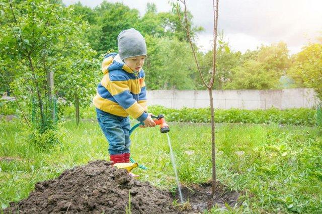 Klima Bäume pflanzen
