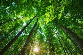 Wald Bäume Klima