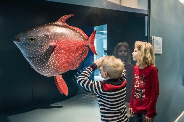 Wissenreise Übersee Museum Tiefsee