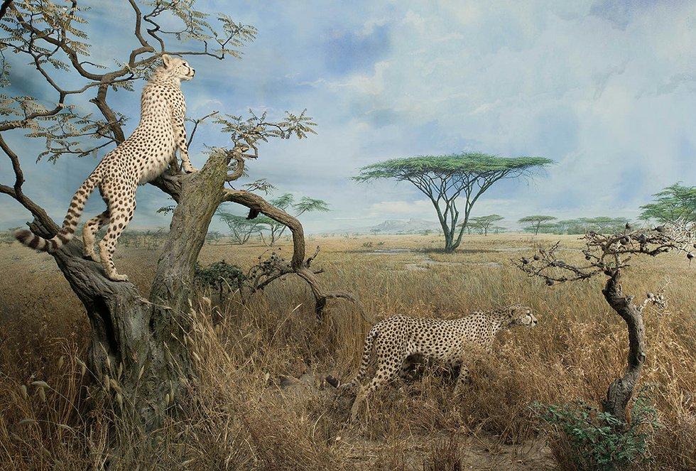 Afrikanische tiere Habitat deutschland
