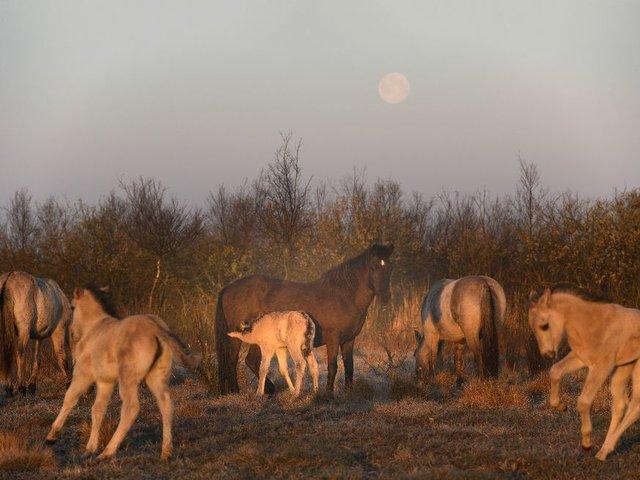 Wild Horses, wilde Pferdeherde, Deutsches Pferdemuseum