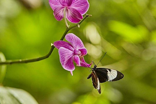 Schmetterlinge in der Botanika
