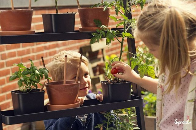 Sprout Sprießende Buntsifte