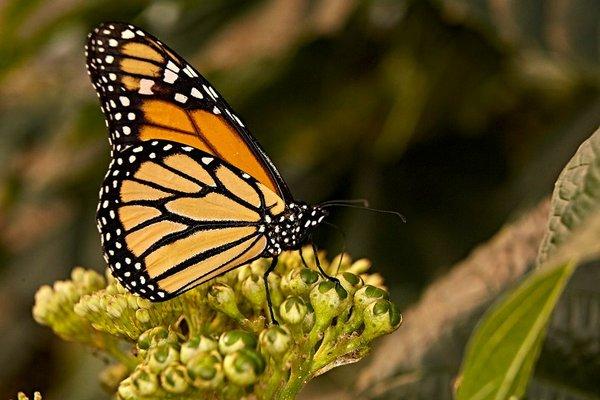 Im Reich der tropischen Schmetterlinge, Botanika Bremen