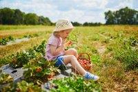 Erdbeeren pflücken in und um Bremen