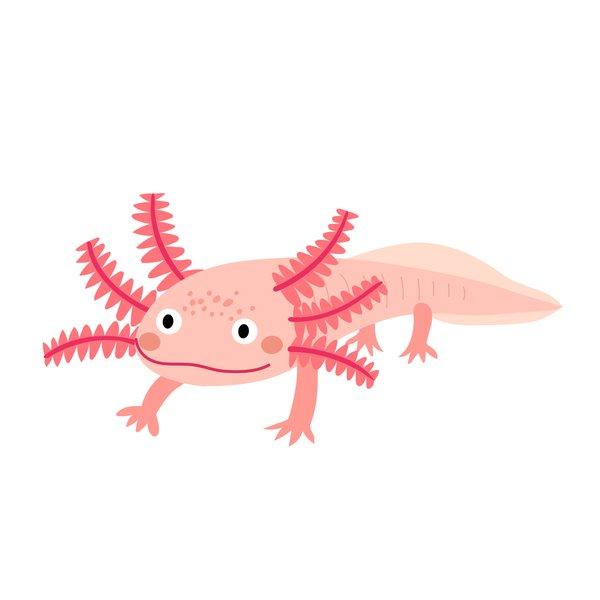 Haustiere, Axolotl