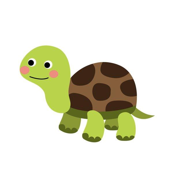 Haustiere, Landschildkröte
