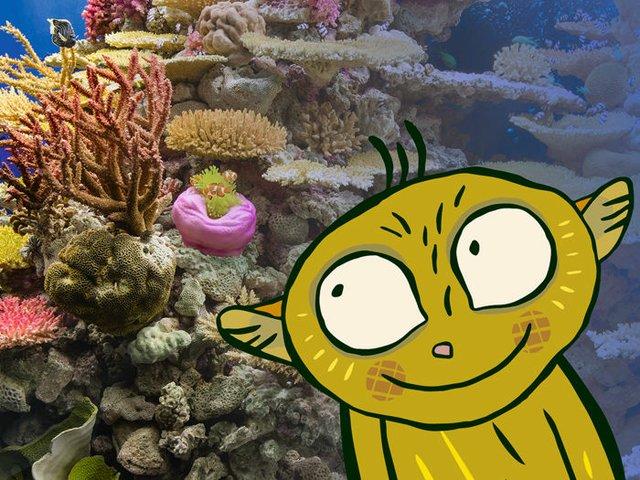 Wissensreise Korallen
