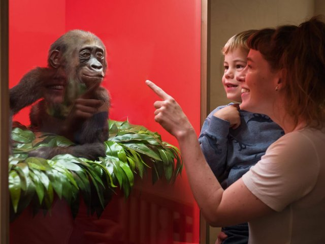 Tierisch erwachsen werden, Übersee Museum