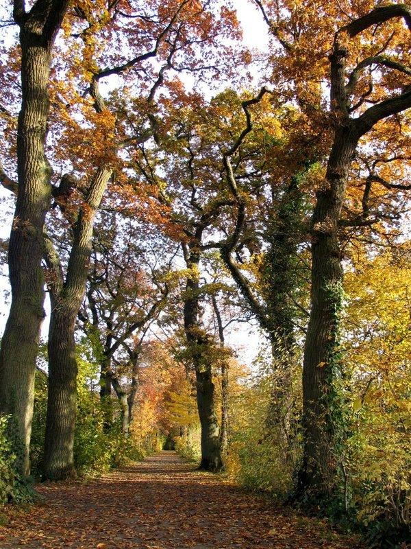 Erlebniskurs Bäume und ihre Märchen