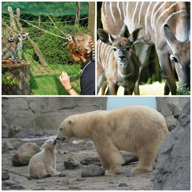 Tierkinder, Marty und Lale