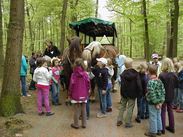 Für Waldliebhaber – Kutschbock wird zum Aussichtpunkt, Deutsches Pferdemuseum