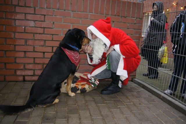 Weihnachtsbescherung für die Tiere mit Besucher-Sonntag, Tierheim an der Hemmstr.