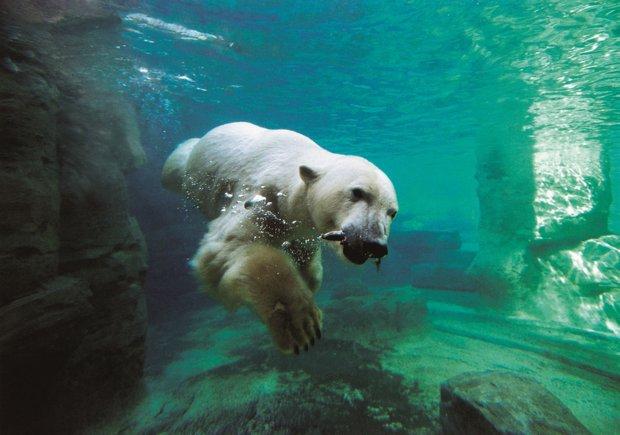 Eisbär_groß.jpg