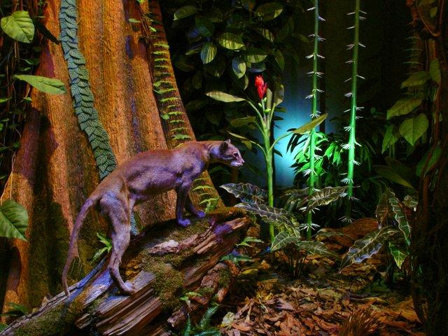 Regenwaldforscher, Überseemuseum