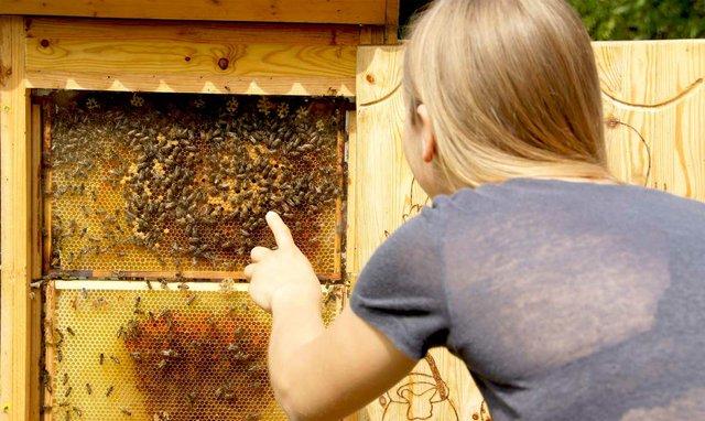 Tag der Biene, Wildpark Schwarze Berge