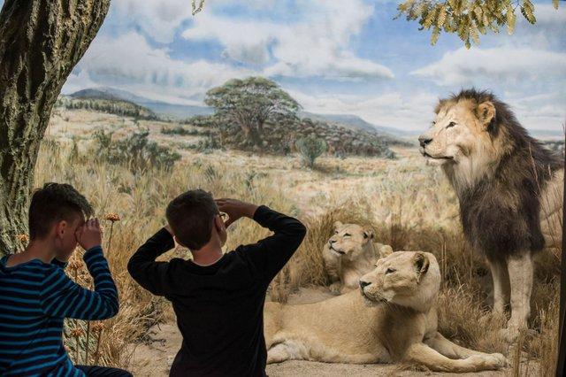 Kinder auf Safari Übersee-Museum