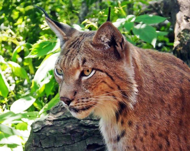 Tier- und Wildparks in Bremen und Umgebung