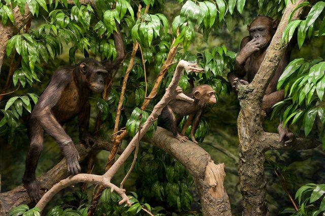 Tierisch gut erforscht, Übersee-Museum