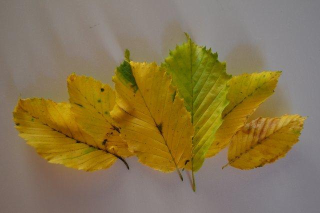 Blätter.JPG