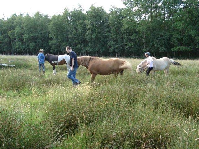 Begegnungen mit Pferden