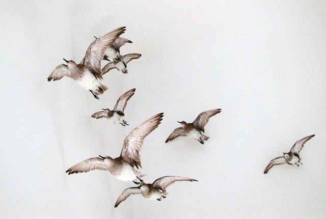 LMNM_Workshop-Fliegende-Zugvögel.jpg