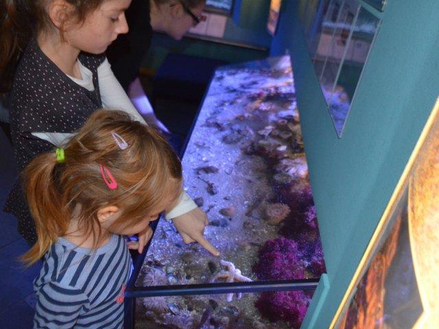 Große Fische, kleine Fische, Landesmuseum Natur und Mensch Oldenburg