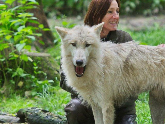 Wolfsabend mit Kinderprogramm, Wisentgehege Springe