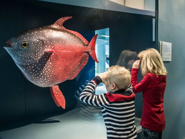 Erlebnisreise um die Welt, Übersee-Museum