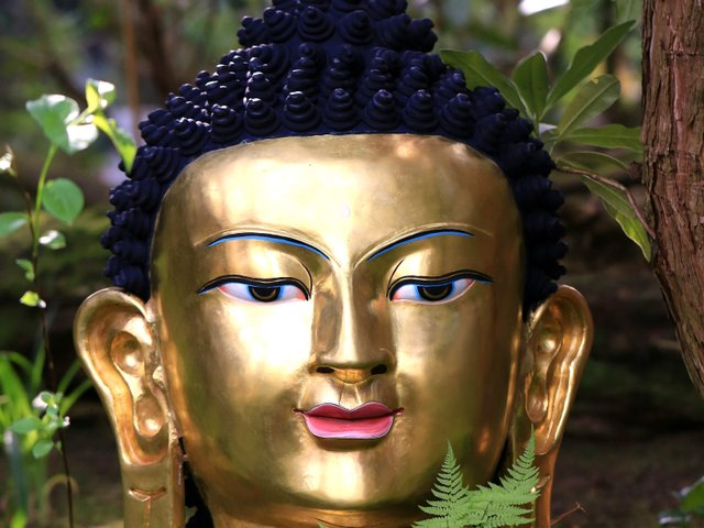Buddha botanika