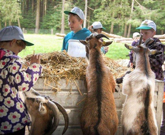Ein Tag als Tierpfleger