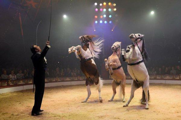 Karl Trunk und seine Pferde