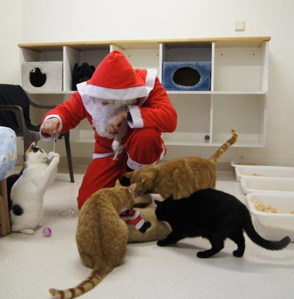 Weihnachtsbescherung für die Tiere