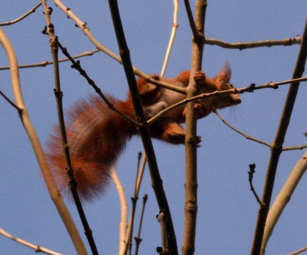 Eichhörnchen-Expedition