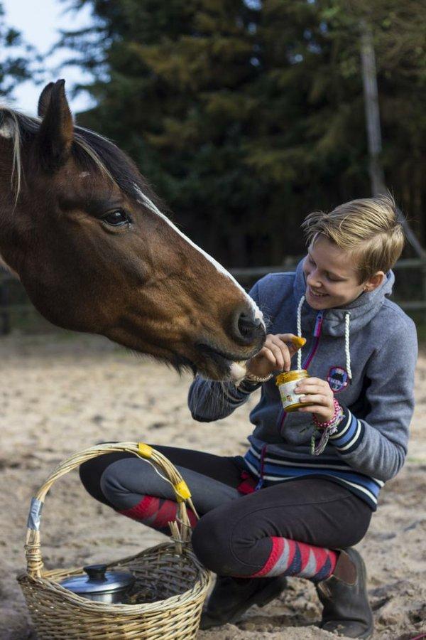 Freundschaft mit Pferden