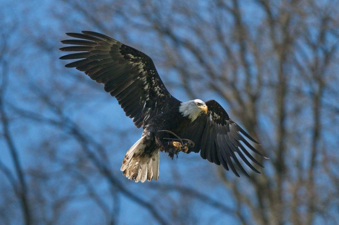 Flugschau mit den Falknern