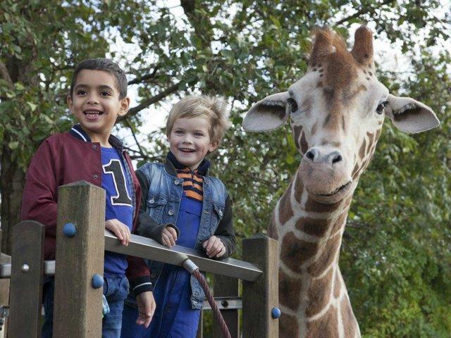 Mein Freund die Giraffe Teaser