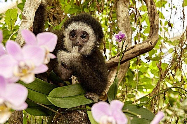 botanika_Gibbon-Jupp_MM_8941.jpg