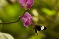botanika_Schmetterlinge_MM_9184.jpg