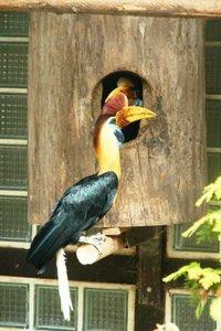 K640_Zoo(c)Weltvogelpark Walsrode_Helmhornvogel am Nest.JPG