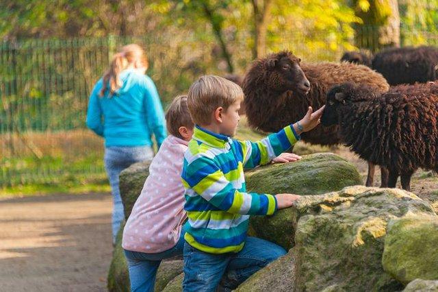 K640_Zoo(c)Wingst Zoo_Maike Hoop_Kinder im Streichelzoo.JPG