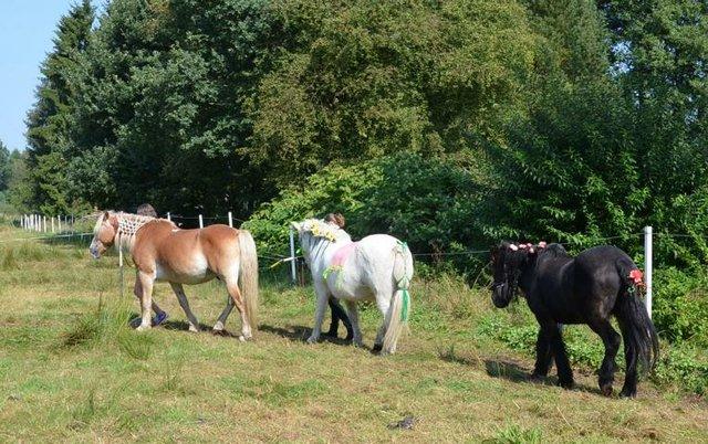 Ferien mit Ponys