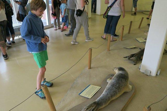 Seehundstation Ausstellung