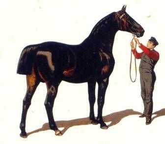 Pferdetag
