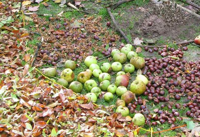 Herbstfrüchte und Apfelsaft