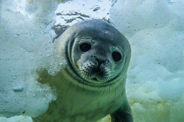 Robbenforschung