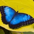 Schmetterlinge - Botanika