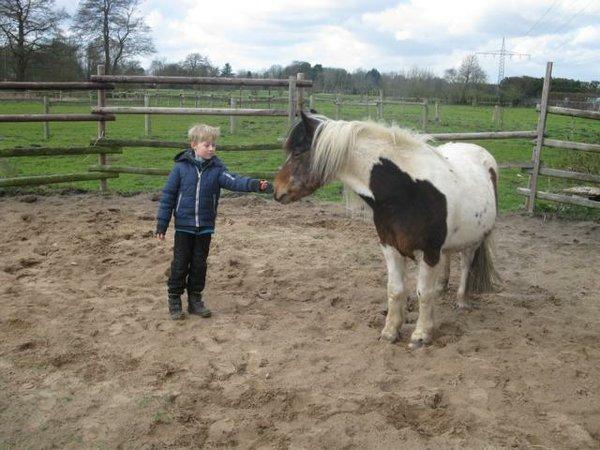 Junge mit Pony reiten pferde