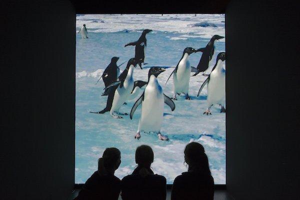 Antarctica_Blick_in_die_Ausstellung_3__c__UEbersee-Museum_Bremen__Foto_Volker_Beinhorn.jpg