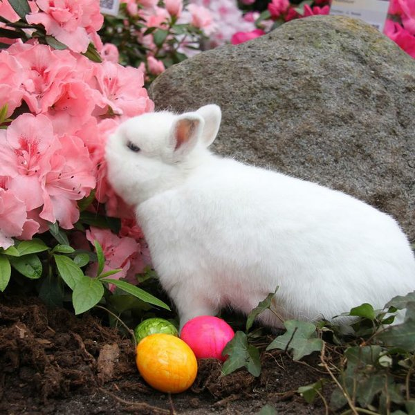 Botanika Kaninchen mit Azaleen